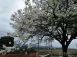 灵山漂亮的树