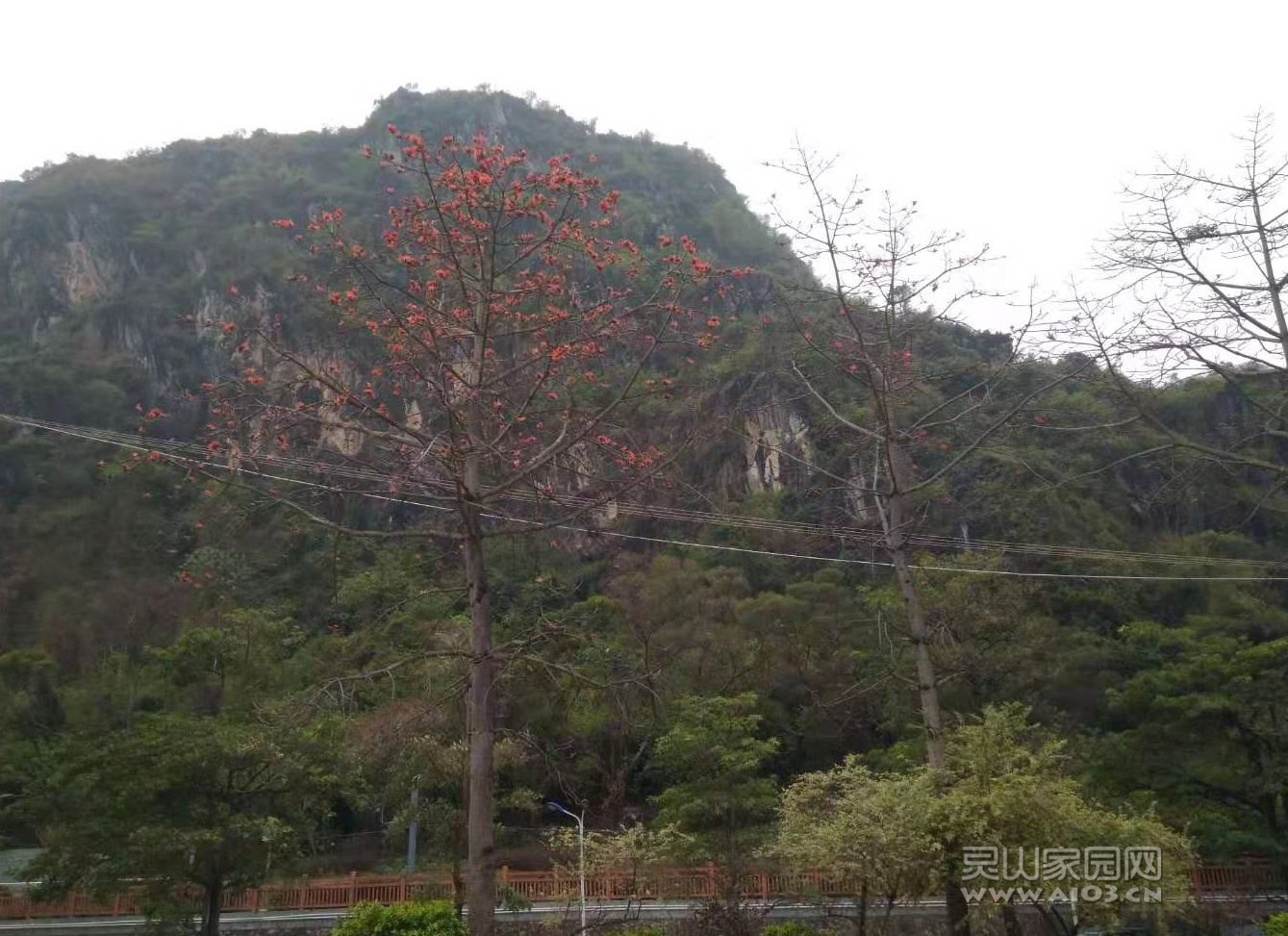 六峰山下木棉红.jpg