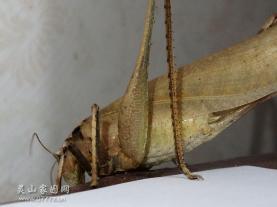 屋里迎來昆蟲客光臨