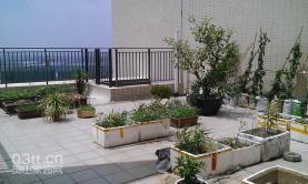 偶遇天台上的菜园