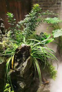 灵山盆栽,仙雾缭绕