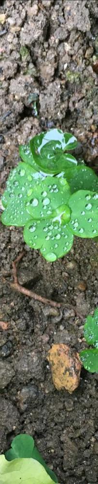 另一個雨天