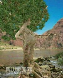 这棵树怀孕了