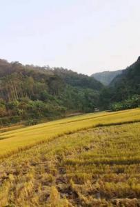 灵山丰收季节